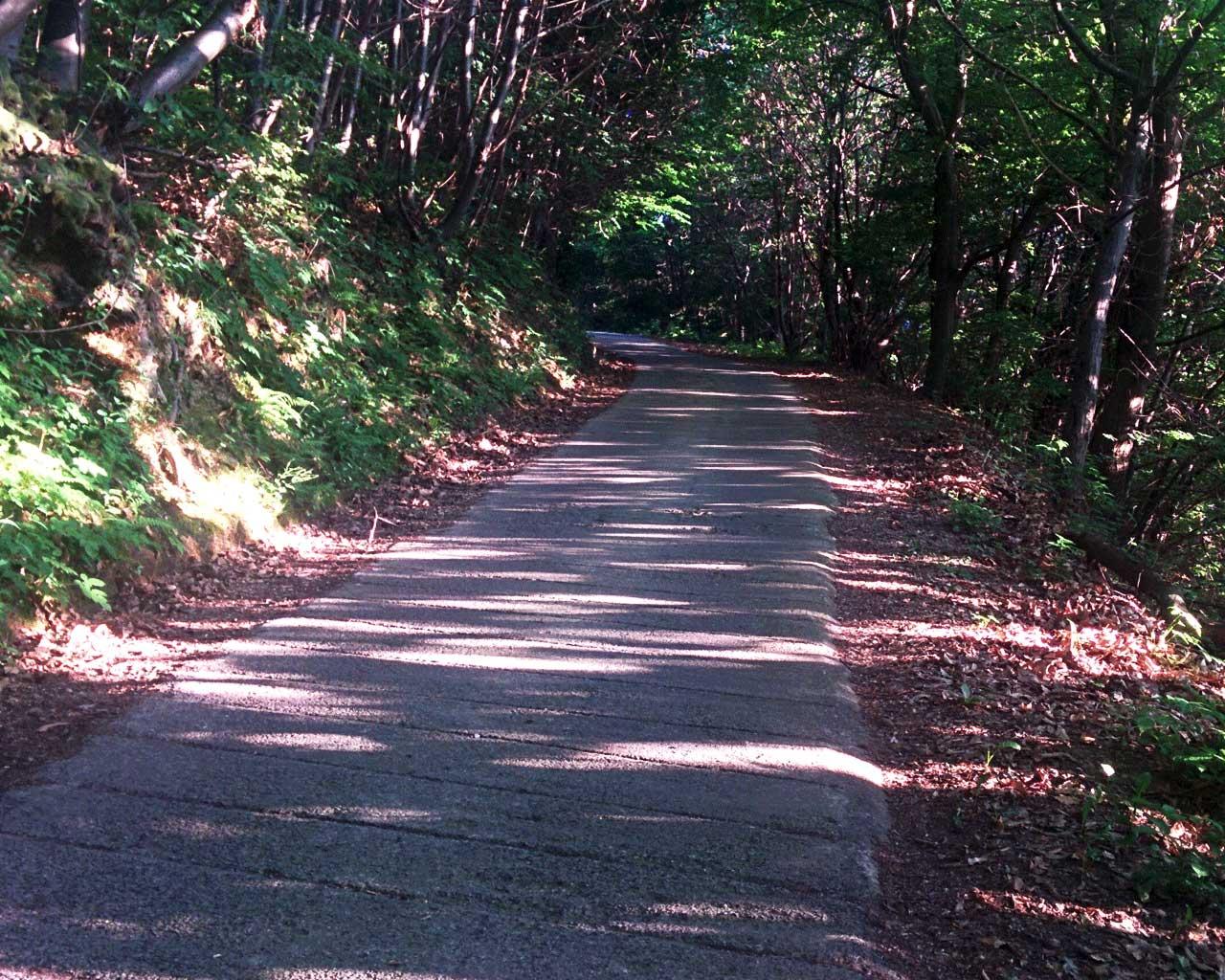 Un tratto della cementata della Passata, orlata di foglie autunnali