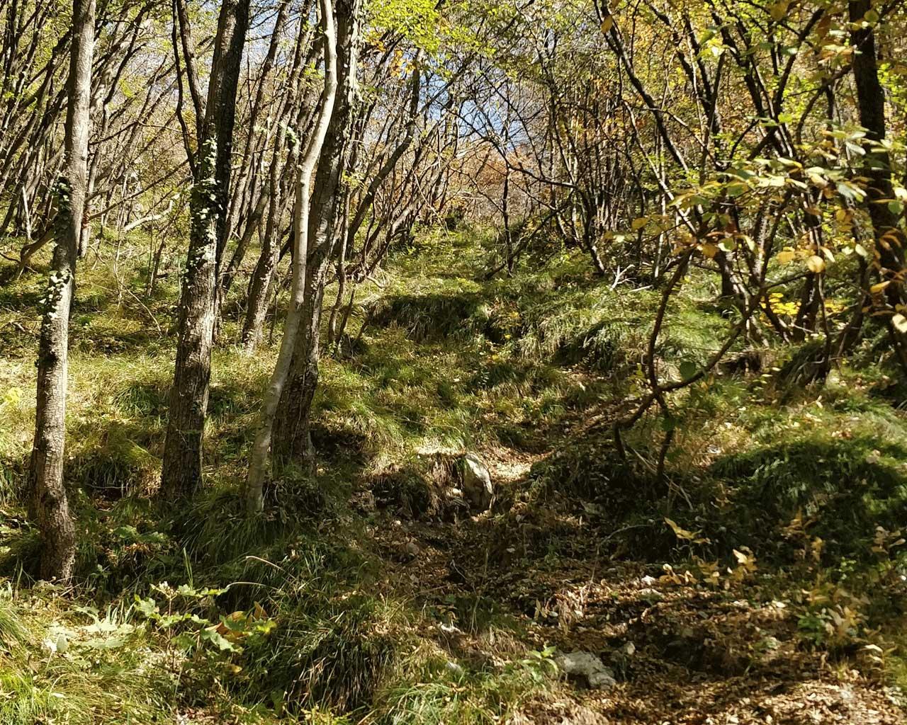 L'erto sentiero della Scodella nell'intrico di alberi che lo circonda