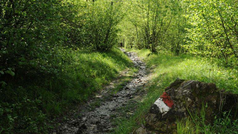 Sentiero e roccia con segnavia Cai