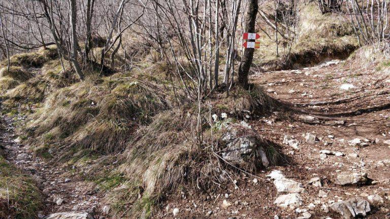 Bivio sentiero ricoperto di foglie