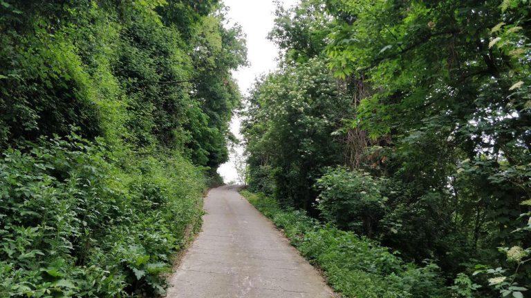 Strada cementata che sale nel bosco