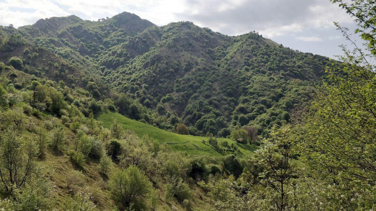 Pascoli verdi e montagna sullo sfondo